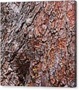 Tree Trunk Abstract Canvas Print