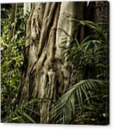 Tree Trunk And Ferns Canvas Print