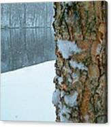 Tree Trunk Bark And River In Snowfall Canvas Print
