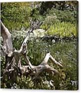 Tree Trunk In The Meadow Canvas Print