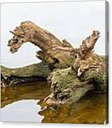 Tree Trunk In Water Canvas Print