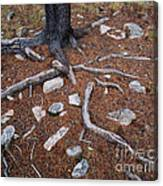 Tree Trunk Roots And Rocks Canvas Print