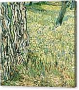 Tree Trunks In Grass Canvas Print