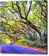 Tree Tunnel On The Big Island Canvas Print