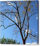 Tree Under Blue Sky Canvas Print