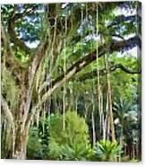Tree-waimea Arboretum Canvas Print