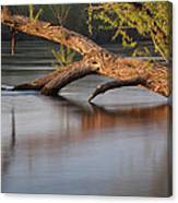 Tree Wash Canvas Print