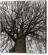 Tree Web Canvas Print