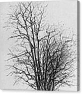 Tree With Figures Canvas Print