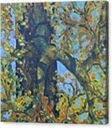 Tree With Green Leaves Canvas Print