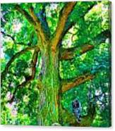 Tree With Owl Gnome And Mushroom Canvas Print