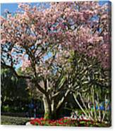 Tree With Pink Flowers Canvas Print
