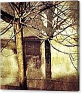 Tree With Shadows Canvas Print