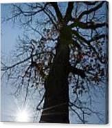 Tree With Sun Canvas Print