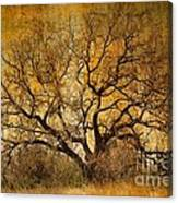 Tree Without Shade Canvas Print