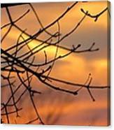 Trees Ablaze In Autumn Canvas Print