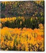 Trees Ablaze Canvas Print