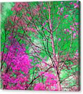Trees Alive In Pink Canvas Print