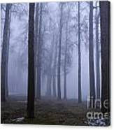 Trees Along Greenlake In Fog Canvas Print