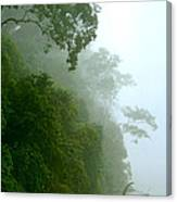 Trees Along The Boumba River Canvas Print