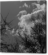 Trees And Clouds 3 Bw Canvas Print