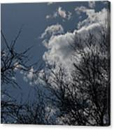 Trees And Clouds 3 Canvas Print