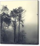 Trees And Fog At Castle Hill Canvas Print