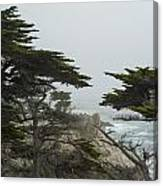 Trees And Mist Canvas Print