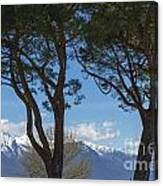 Trees And Snow-capped Mountain Canvas Print