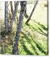Trees At A Picnic Canvas Print