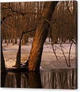 Trees At Collins Creek Canvas Print