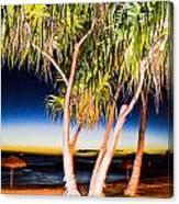 Trees At Night Canvas Print