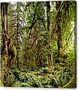 Trees At Olympic National Forest Canvas Print