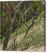 Trees At The Edge Of A Dune At Silver Lake Canvas Print