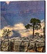 Trees At The Grand Canyon Canvas Print