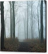 Trees During Autumn In Forest, Dupage Canvas Print