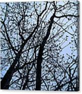 Trees From Below Canvas Print