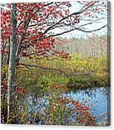 Trees In A Forest, Damariscotta Canvas Print