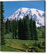 Trees In A Forest, Mt Rainier National Canvas Print