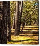 Trees In A Park Canvas Print