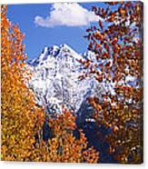 Trees In Autumn, Colorado, Usa Canvas Print