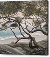 Trees In Costa Rica Canvas Print