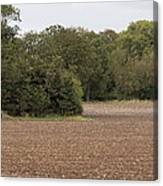 Trees In Field Canvas Print