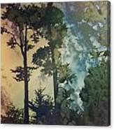 Trees In Golden Gate Park Canvas Print