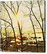Trees In Marsh, Maine, Usa Canvas Print