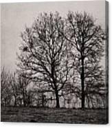 Trees In November Canvas Print