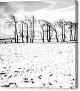 Trees In Snow Scotland Iv Canvas Print