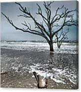 Trees In Surf Canvas Print