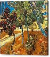 Trees In The Asylum Gardens Canvas Print