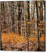 Trees In The Forest In March With Orange Leaves Canvas Print
